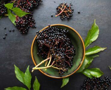 Elderberry For Immune Defense